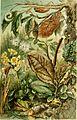 Brehms Tierleben; allgemeine kunde des thierreichs. Mit 1910 abbildungen im text, 11 karten und 180 tafeln in farbendruck und holzschnitt. (1893) (20420001761).jpg