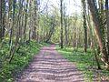 Breuil-le-Sec (Oise) - Crapin - Chemin dans le bois des Côtes.JPG