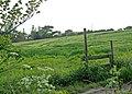 Bridge Farm - geograph.org.uk - 1327542.jpg
