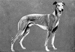 Britannica Dog 24.jpg