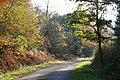 Broadclyst, Ashclyst Forest - geograph.org.uk - 81916.jpg