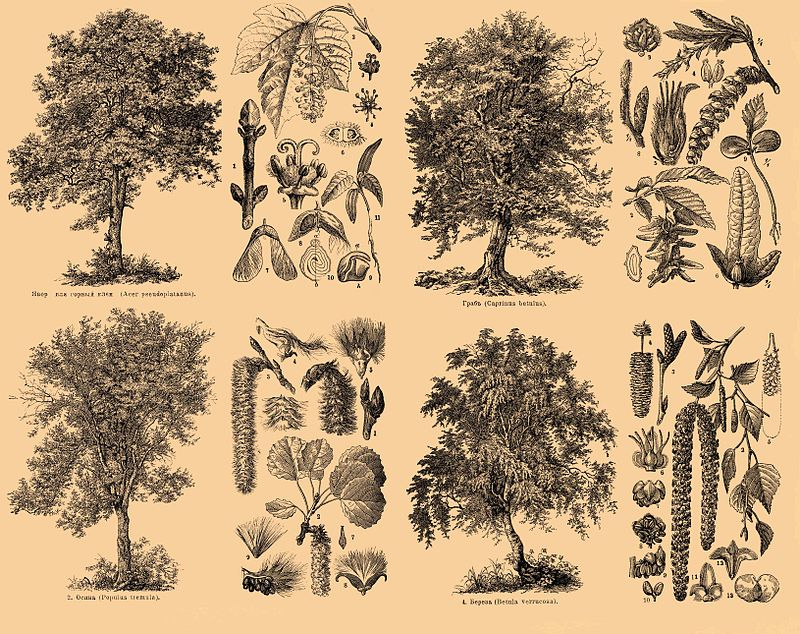 Brockhaus and Efron Encyclopedic Dictionary b35 186-1.jpg