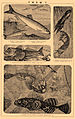 Brockhaus and Efron Encyclopedic Dictionary b53 432-7.jpg