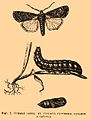Brockhaus and Efron Encyclopedic Dictionary b60 672-2.jpg