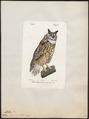 Bubo maximus - 1842-1848 - Print - Iconographia Zoologica - Special Collections University of Amsterdam - UBA01 IZ18400059.tif