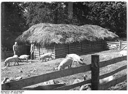 Porcherie sur - Comment construire une porcherie ...