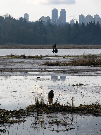 Burnaby Lake Regional Park - Burnaby Lake on a cloudy day. Metrotown in the distance