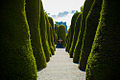 Bushes of Cemetery of Punta Arenas.jpg