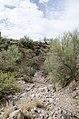 Butcher Jones Trail to Pinter's Point Loop, Tonto National Park, Saguaro Lake, Ft. McDowell, AZ - panoramio (159).jpg