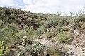 Butcher Jones Trail to Pinter's Point Loop, Tonto National Park, Saguaro Lake, Ft. McDowell, AZ - panoramio (168).jpg