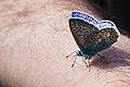 Butterfly 001.jpg