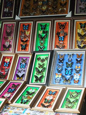 Bantimurung – Bulusaraung National Park - Image: Butterfly Bantimurung