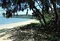 CSIRO ScienceImage 44 Casuarina Tree on a Beach.jpg