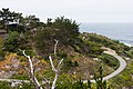Carmel Highlands May 2011 003.jpg