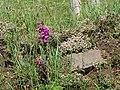 Carreg y Barcud, Trelerw, ger Tyddewi - near St David's, Pembrokeshire, Wales 18.jpg
