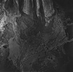 Casement Glacier, valley glacier terminus and outwash plain, August 22, 1979 (GLACIERS 5302).jpg