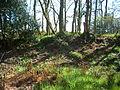 Castle Rings, Donhead St Mary 01.JPG