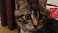 Cat12345cat.png