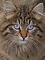 Cat 07464 kalamis safinaz.jpg