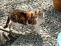 Cat Zwerver in the garden.JPG