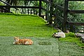 Cats in the grass of Hotel Rural Maipez.jpg