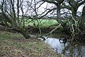 Caundle Brook - geograph.org.uk - 642132.jpg