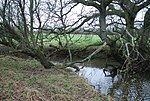 File:Caundle Brook - geograph.org.uk - 642132.jpg