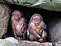 Cavemen (39189151324).jpg