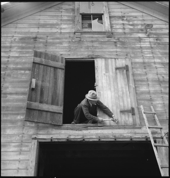 File:Centerville, California. Nailing the hayloft door on the morning of evacuation. Farmers and other . . . - NARA - 537563.tif