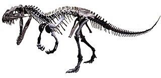 Ceratosauria superfamily of reptiles (fossil)