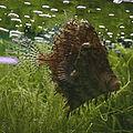Chaetodermis penicilligerus Kew 150919w.jpg