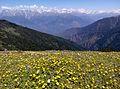 Chandrakhani pass 1, himachal pradesh.jpg