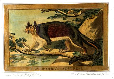 Charles Catton, Animals (1788) Page66 Image1.jpg