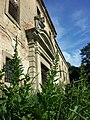 Chenopodium bonus-henricus sl13.jpg