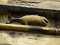 Chimeras at St Mary's Church, Mold - yr Wyddgrug, Wales 42.jpg