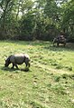 Chitwan National Park Elephant Riding.jpg