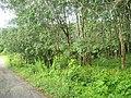 Cho Po Ro, Kra Buri District, Ranong 85110, Thailand - panoramio (14).jpg