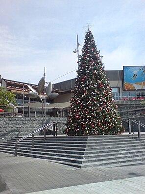 Christmas Tree Albany