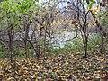 Chyhyryns'kyi district, Cherkas'ka oblast, Ukraine - panoramio (16).jpg