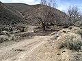 Circle 7 Cow Camp, Seven Troughs Range, Pershing Co., NV - panoramio.jpg