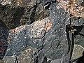 Clast-rich impact pseudotachylite (Sudbury Breccia, Paleoproterozoic, 1.85 Ga; Windy Lake Northwest roadcut, Sudbury Impact Structure, Ontario, Canada) 30 (40773179213).jpg