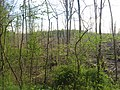 Closed nesting area at the Muscatatuck National Wildlife Refuge.jpg