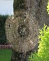 Cobweb 1.jpg