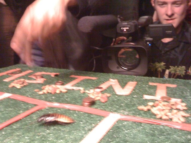 Cockroach Racing at Lost Vegas