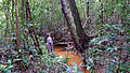 Collecting... Atlantic forest, northern littoral of Bahia, Brazil (15416051085).jpg