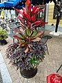 Colorful plants in an outdoor planter at National Harbor in Maryland.JPG