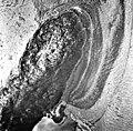 Columbia Glacier, Calving Terminus, June 11, 1978 (GLACIERS 1334).jpg