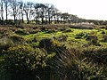 Common Moor - geograph.org.uk - 575350.jpg