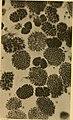 Compte-rendu des séances du sixième Congrès international de zoologie, tenu à Berne du 14 au 19 août 1904 (1905) (20485408340).jpg