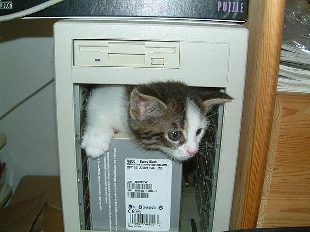 Datei:Computer-kitten.jpg